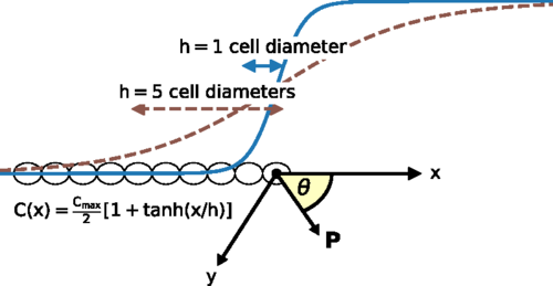 Leader cells in collective chemotaxis: Optimality and trade-offs