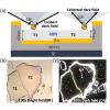 Localized Nanoresonator Mode in Plasmonic Microcavities.